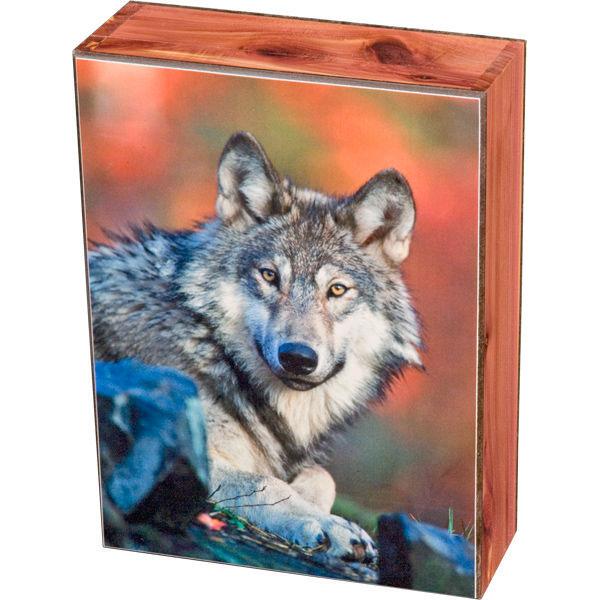 Wolf Stare Keepsake Jewelry Wood Cedar Box